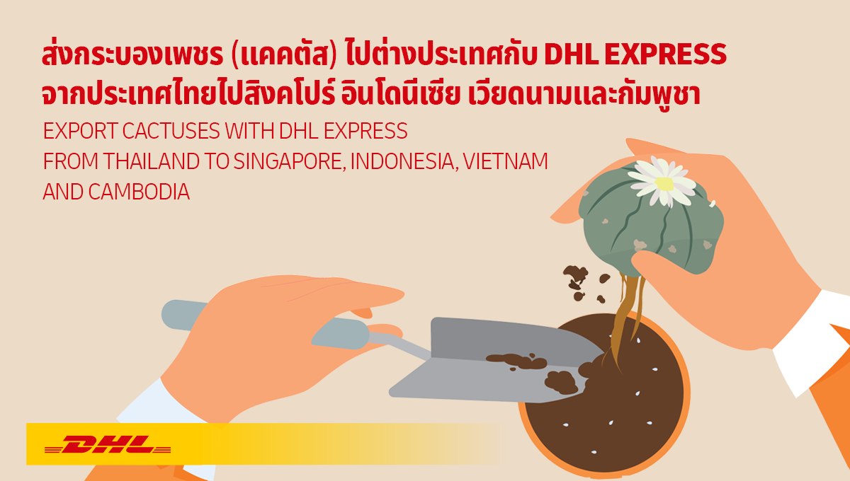 How-TO: ส่งกระบองเพชร (แคคตัส) ไปต่างประเทศกับ DHL Express จากไทยไปสิงคโปร์ อินโดนีเซีย เวียดนามและกัมพูชา